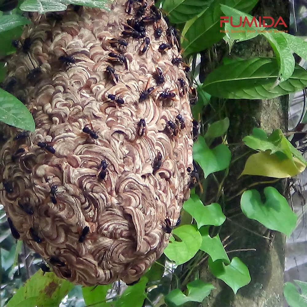 sarang-tawon-vespa.jpg?fit=1000%2C1000&ssl=1