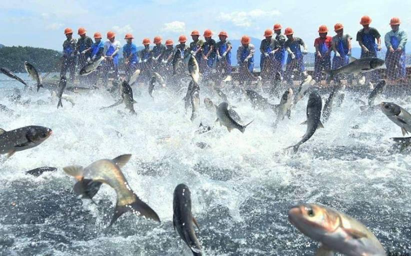 انطلاق فعاليات موسم صيد الاسماك في الصين ..بالصور