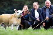 بيع خروف يبلغ من العمر 6أشهر في اسكتلندا بمبلغ 489 ألف دولار