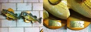 Harold Sharp's fish from Smith Lake, AL (1967) and Chickamauga Lake, TN (1968). Photo courtesy of Chad Sawyer.