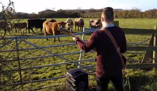 【動画あり】牛の前でベースを演奏!はたして牛は盛り上がるのか…