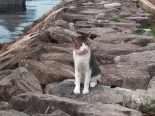 琵琶湖、浮御堂の猫