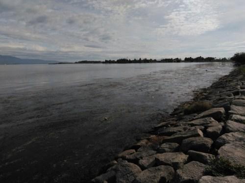 琵琶湖の志那エリア(漁港北側)