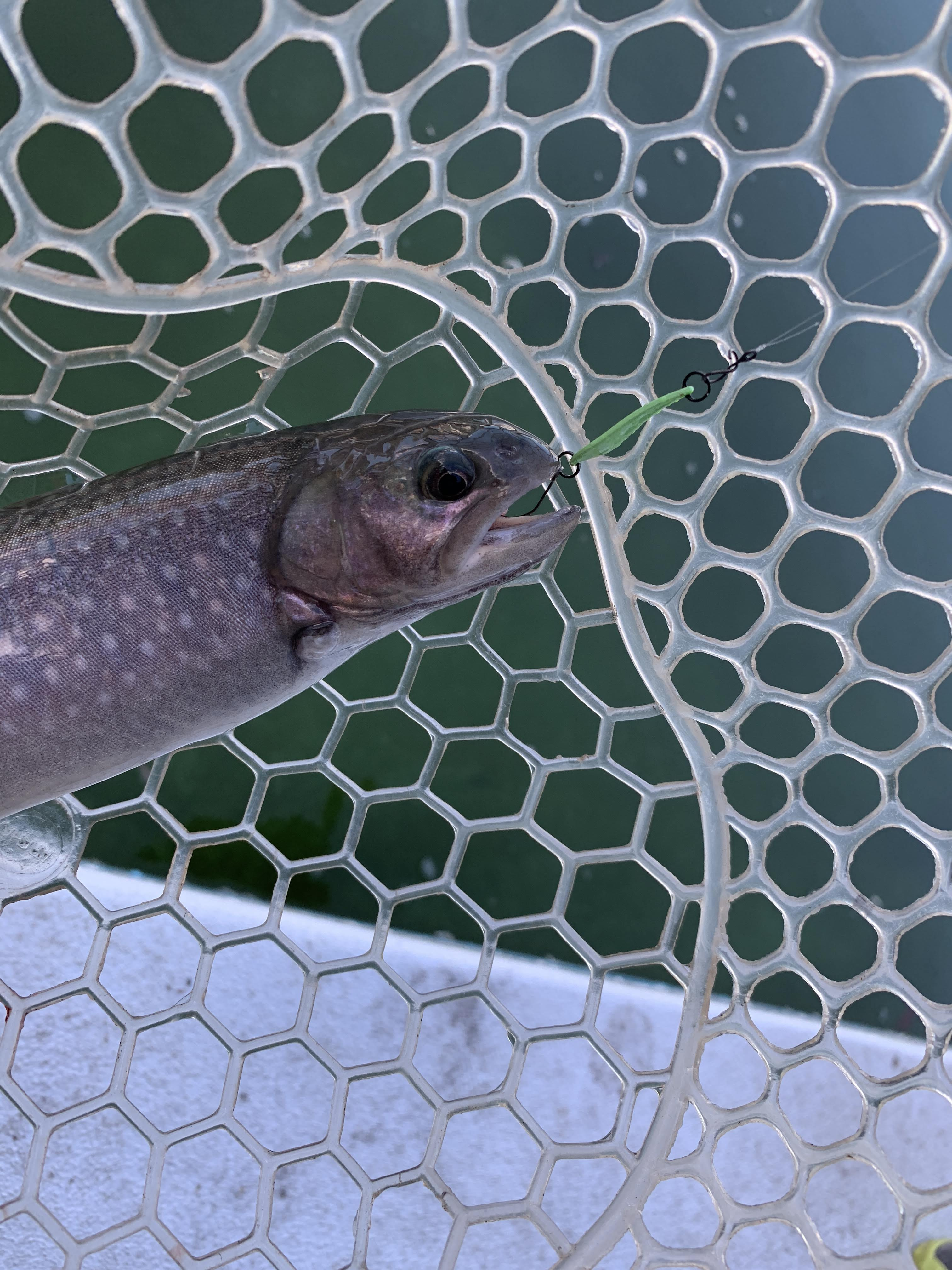 【電車釣行】としまえんフィッシングエリアで今年初釣行【管釣り】