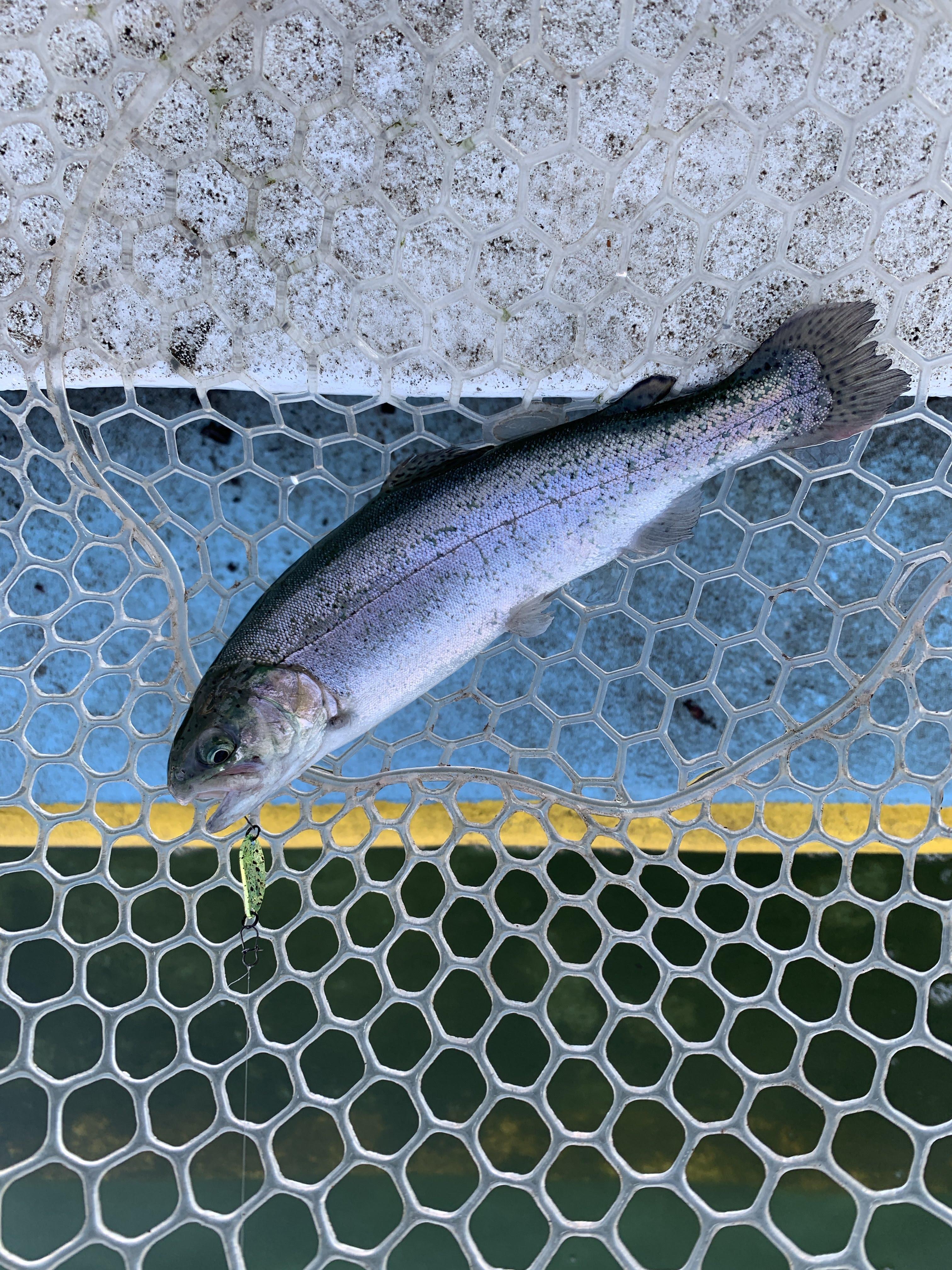【電車釣行】平日のとしまえんフィッシングエリアは快適【管釣り】