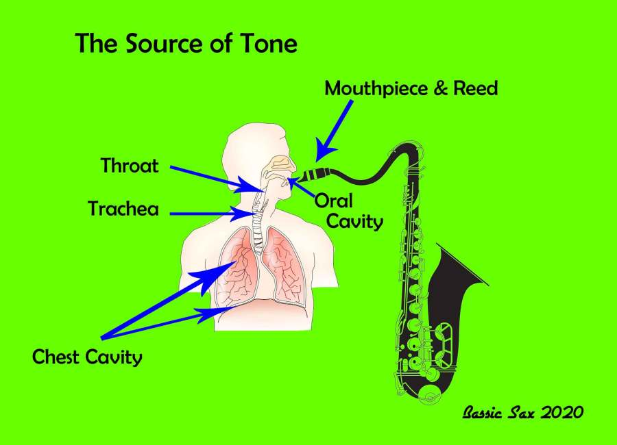 the source of tone, sax outline, oral cavity, chest cavity, throat, trachea, mouthpiece, reed