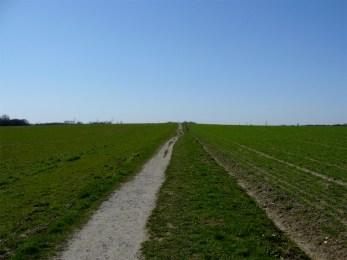 Durch die Felder