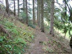 Kurzer Trail bei Andreasberg