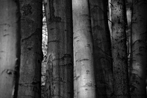 Man sieht den Wald vor Bäumen nicht