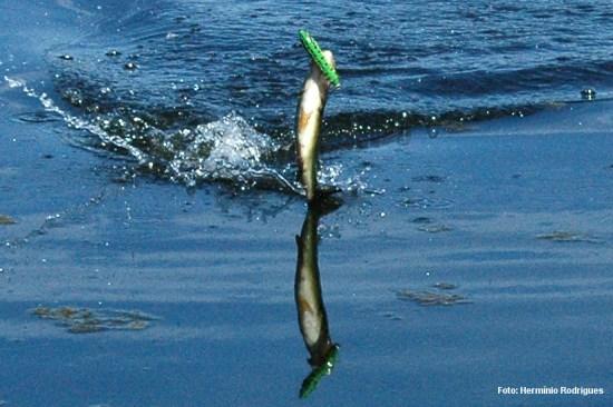 Apesar de serem amostras para peixes grandes, os mais pequenos também não resistem