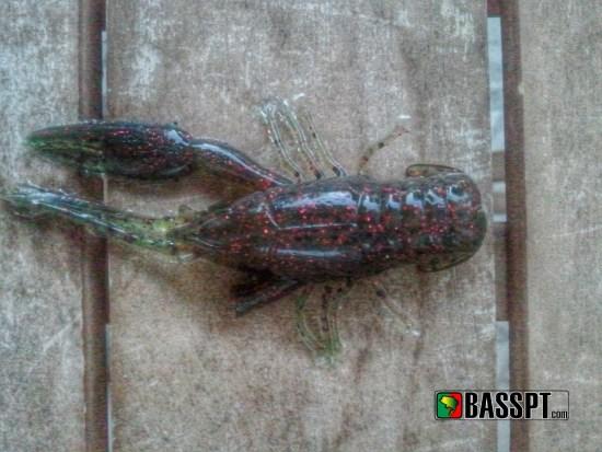 Um lagostim com menos uma pata certamente oferecerá menos resistência a um achigã