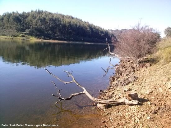 Sequencia de árvores arrastadas até ao nivel da barragem