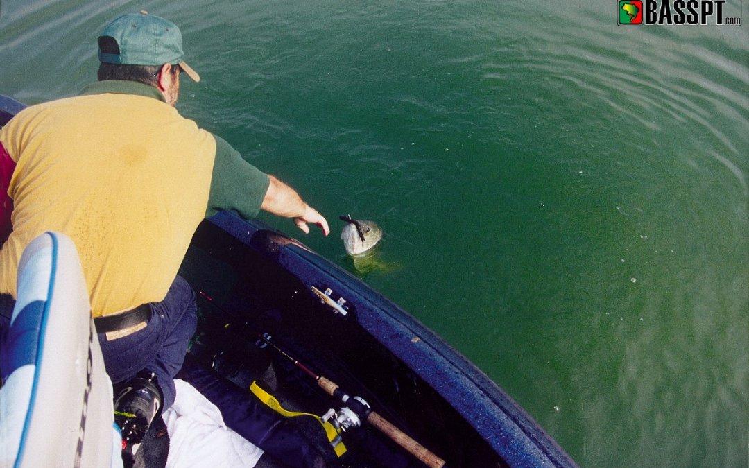 Clareza na aproximação à gestão da pesca do achigã