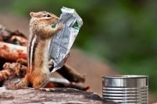 Mmm...il Dow Jones oggi è in perdita, e ora dove le investo le mie ghiande?!?