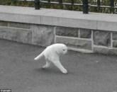 Gatto tagliato
