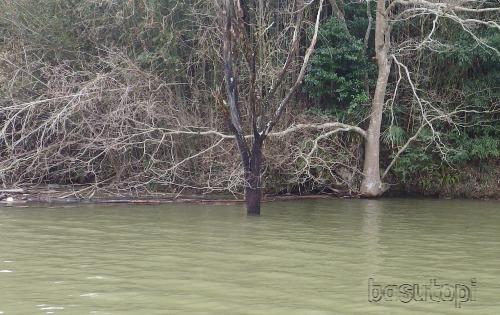 立ち木の写真