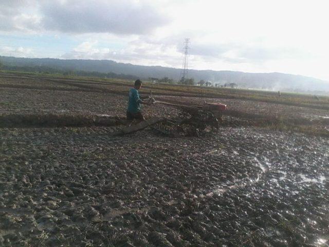 Petani membajak sawah dengan traktor/foto : denis p ©batas.id