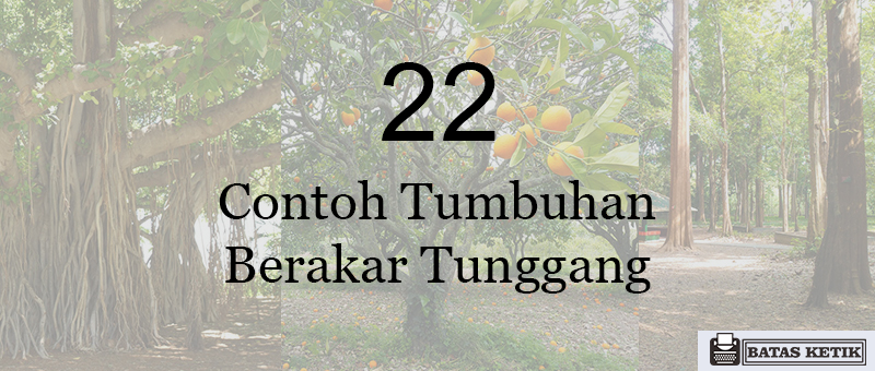 22 contoh tumbuhan berakar tunggang