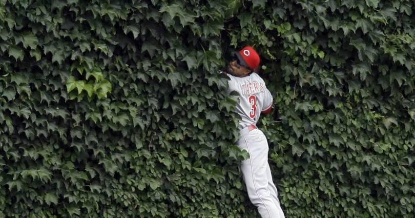 Ivy-clad walls at Wrigley Field
