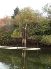 Heron on Oxbow piling