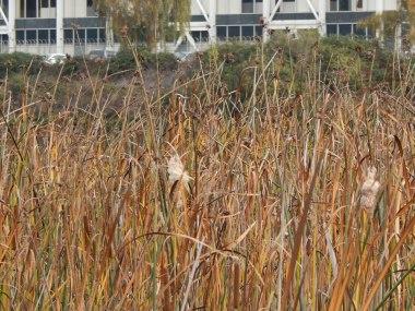 Marsh Grass and Boeing - Turning basin 3