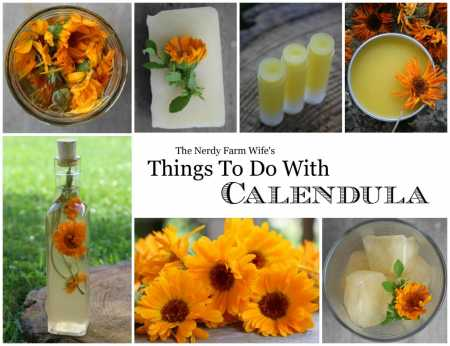 Things-To-Do-With-Calendula-final-cover-for-the-book
