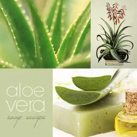 aloe-vera-soap-recipe1