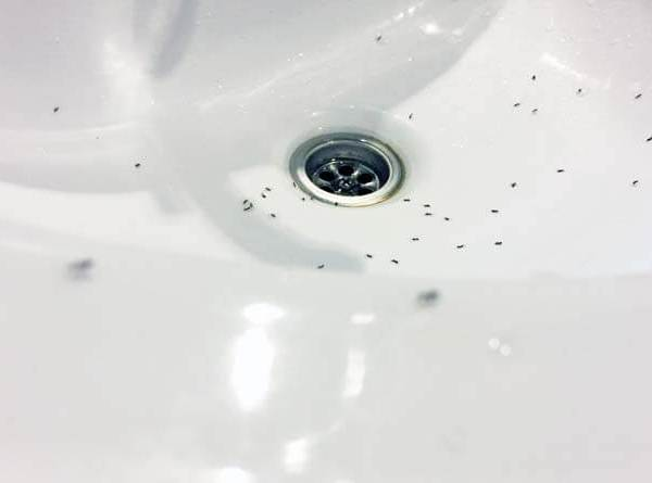 How Do I Get Rid Of Ants In My Bathroom Sink
