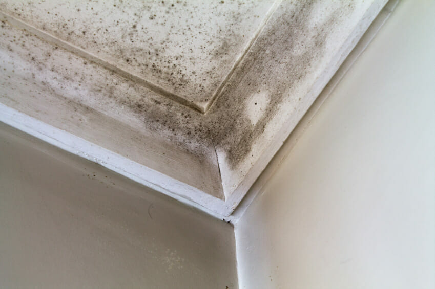 clean bathroom mold and mildew -