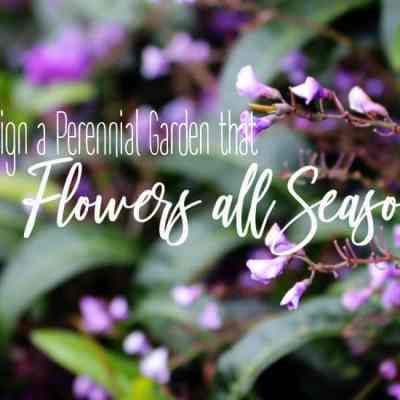 Design a Perennial Garden with Flowers that Bloom all Year
