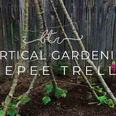 Vertical Gardening: Amp up your Garden with this Tepee Trellis Idea