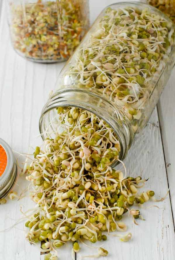 Grow Mung beans or sprouts in a Mason jar for a fresh addition to your sandwich.