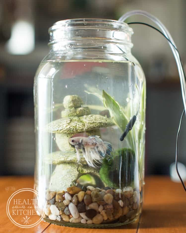 Use a Mason jar to create a self cleaning aquarium.
