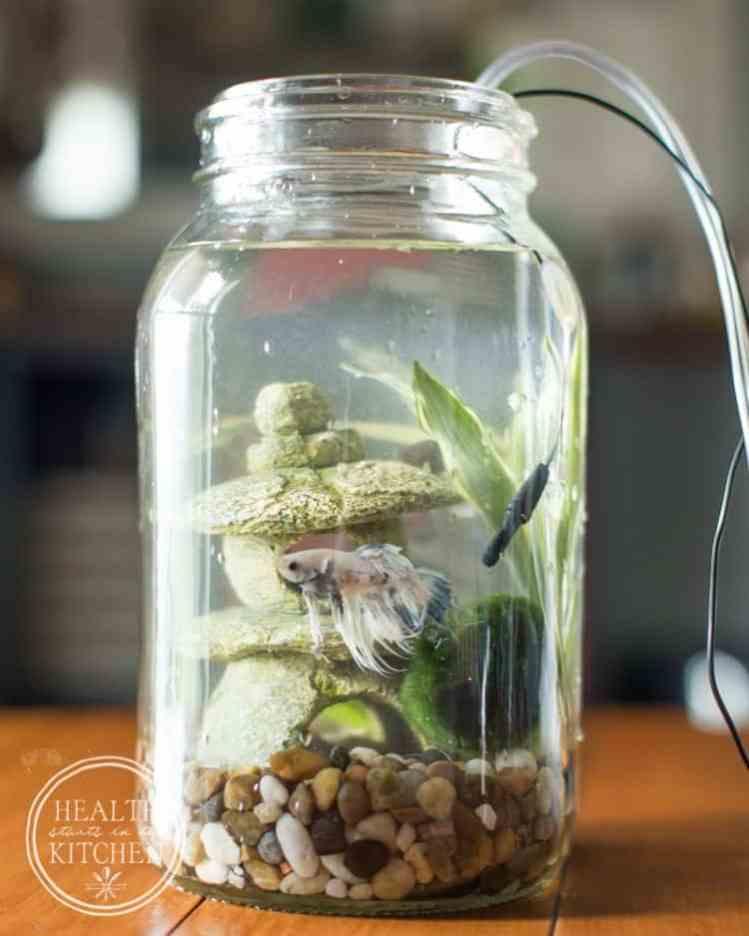 Use a Mason jar to create a self cleaning aquarium.