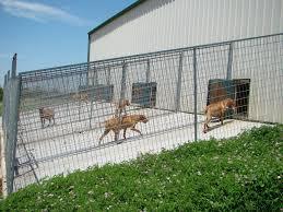 Bâtiment élevage chien gratuit financé par le solaire