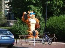 Mascotte (Université de Princeton)