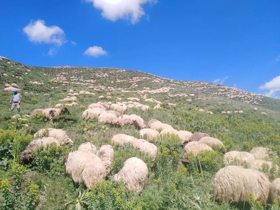 Karların yeni eridiği Mereto Dağı'na ilkbahar yeni geldi