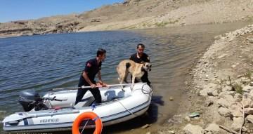 Batman Çayında uzun süre mahsur kalan köpek itfaiye ekiplerince kurtarıldı