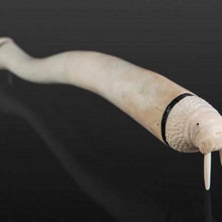 baculum-walrus