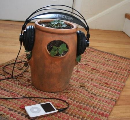 plant-listening