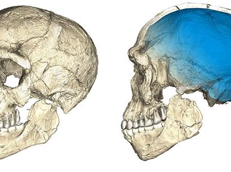Jebel Irhoud skull