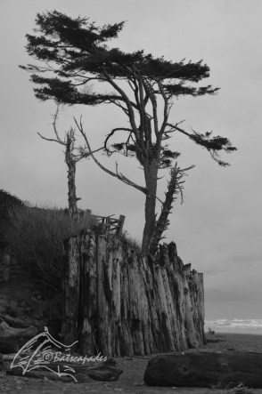 Entrance to Ruby Beach