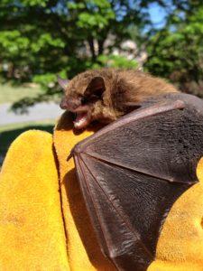Johns Creek Bat