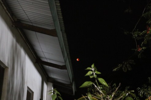 Blood moon garden