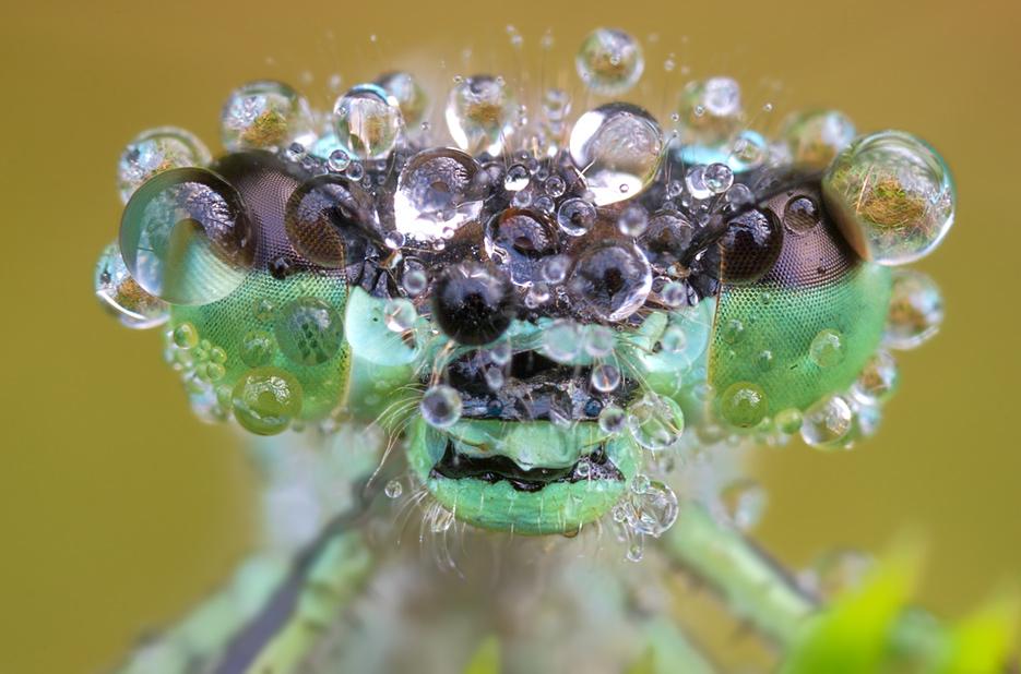 By Martin Amm (http://photo.net/photos/Martin%20Amm)