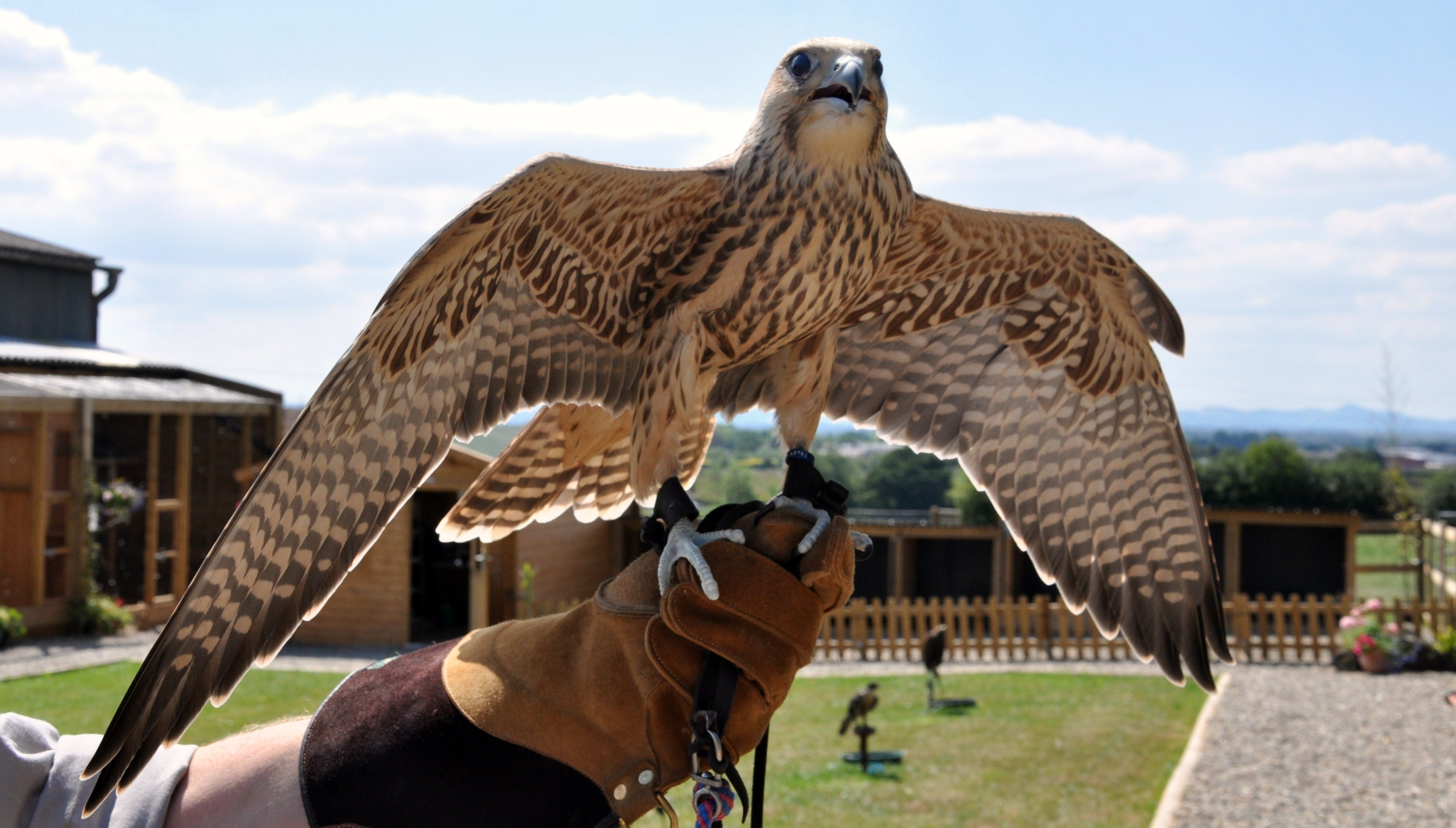 Bird of Prey Experience