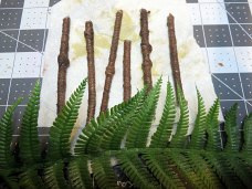 Sean Souter Palm Tree Tutorial Fronds