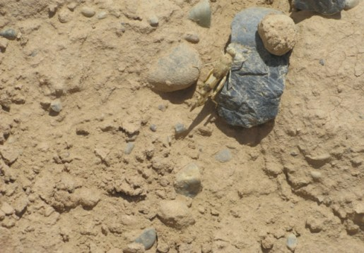 A grasshopper prowls at Camp Dwyer, Afghanistan.