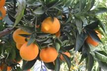 minoeco-crete-033