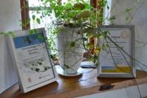 ecotopia-2018-strawbale-workshop-188